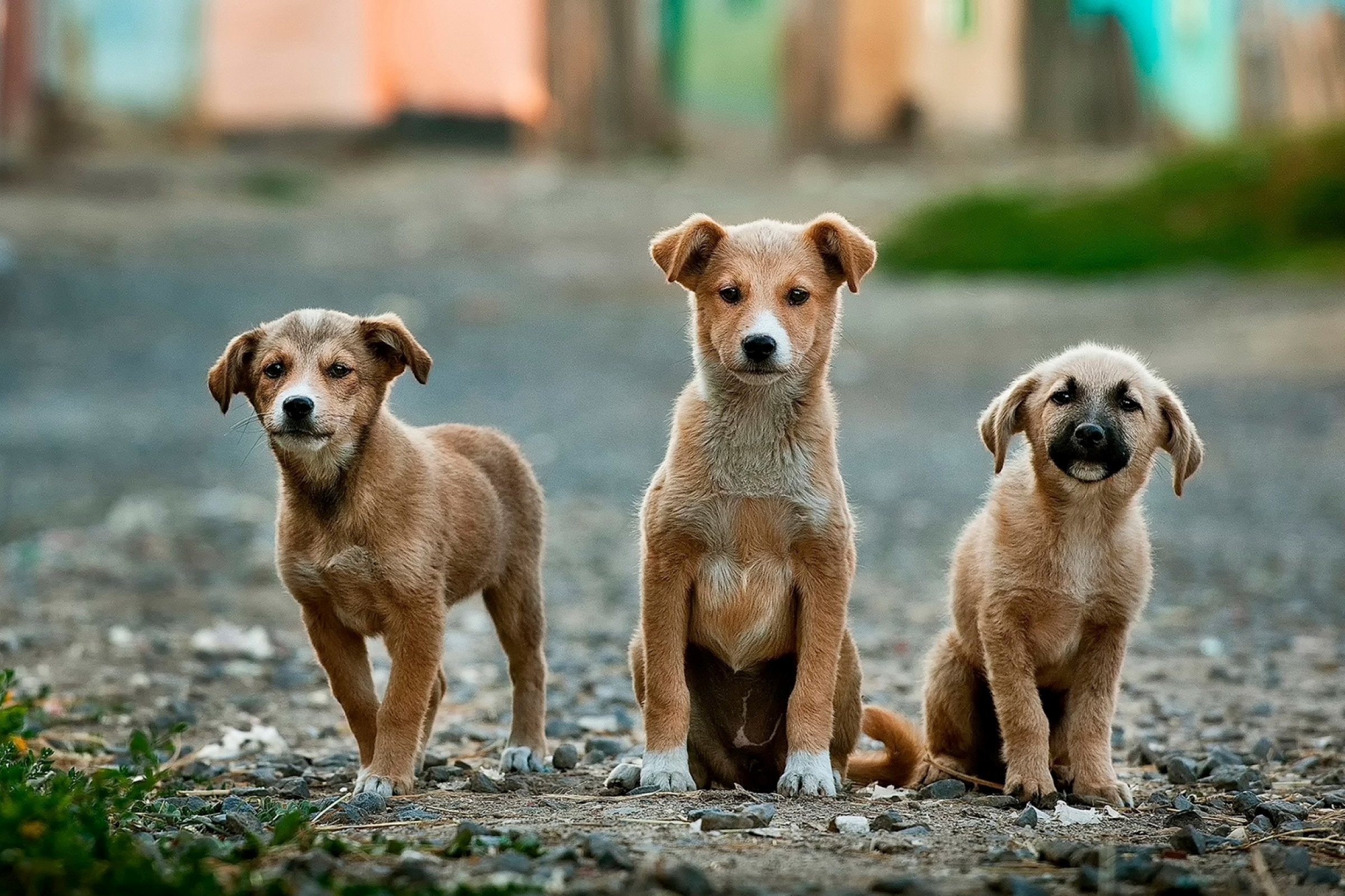 Dogs-image-for-abc-program